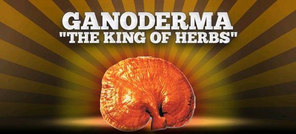 ganoderma king of herbs
